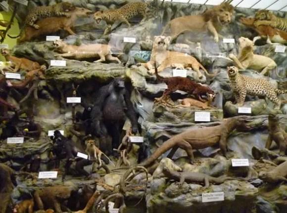 Teilansicht von ueber 1500 praeparierten Tieren