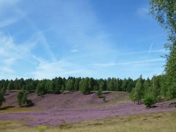 Wandern Radwandern im Naturschutzgebiet Brachter Wald