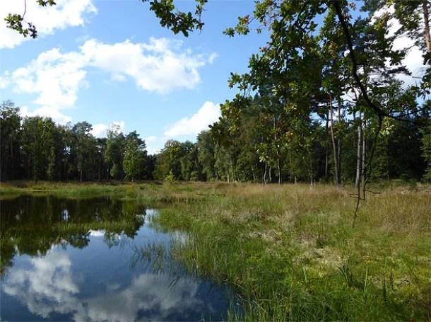 Heidemoor im Grenzwald Kaldenkirchen Naturpark Schwalm-Nette