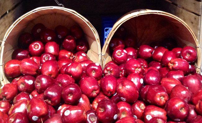 apples teachers