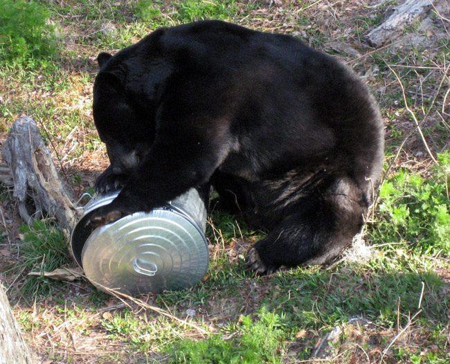 bears palm coast florida