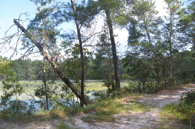 Graham Swamp in Palm Coast has long been favored by men indulging in what Mark Twain called 'this stately subject.' (© FlaglerLive)