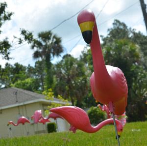 don featherstone is dead pink flamingos