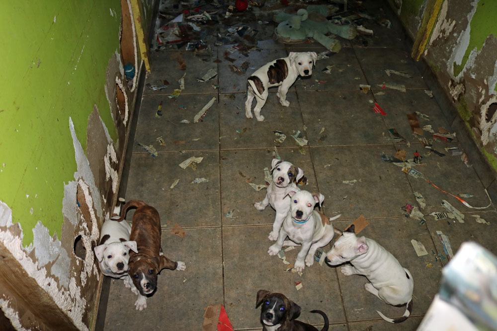 The scene inside Ruth Rupprecht's animal rescue operation. (FCSO)