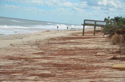 hurricane matthew sea colony