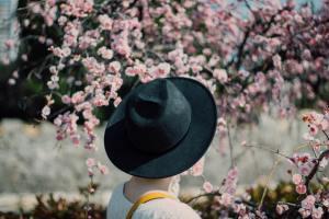 お花見の楽しみ方