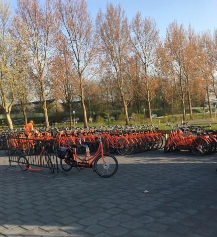 Cycle store near keukenhof