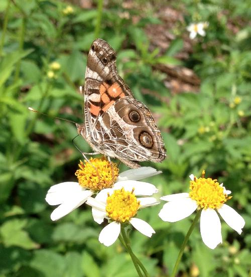 butterfly_6592_500