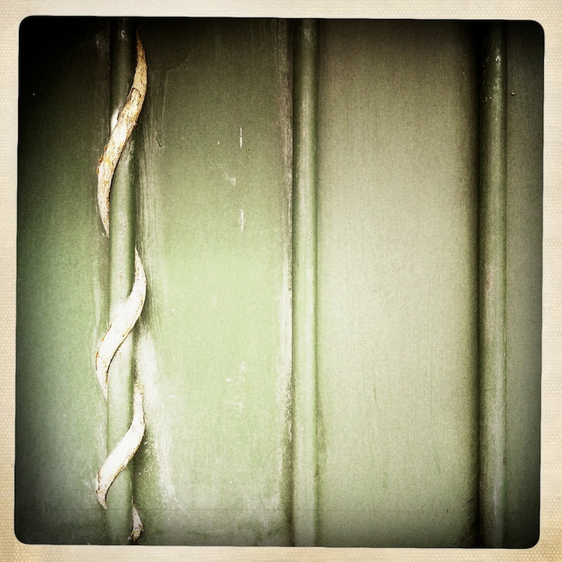 A vine twisting around a metal fence-post