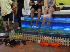 Fish Therapy for your feet at the Night Bazaar