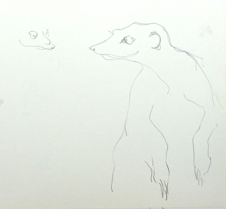 'Meerkats'