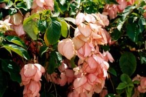 Busch Gardens flora