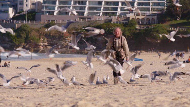 The Pack that Scares Gulls