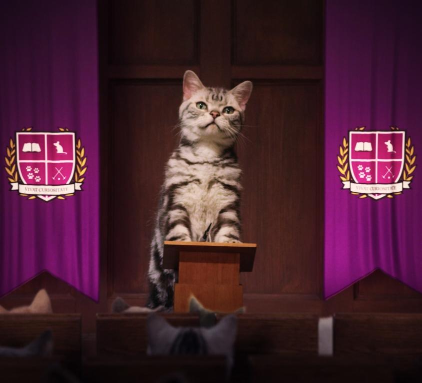 Kitten Kollege