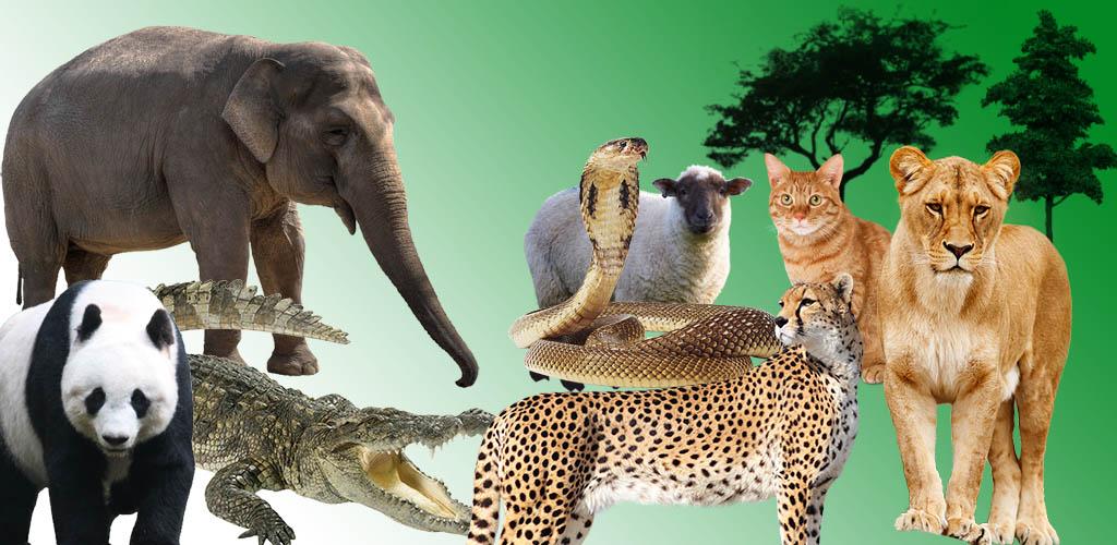 الحيوانات البرية المفترسة في الغابة