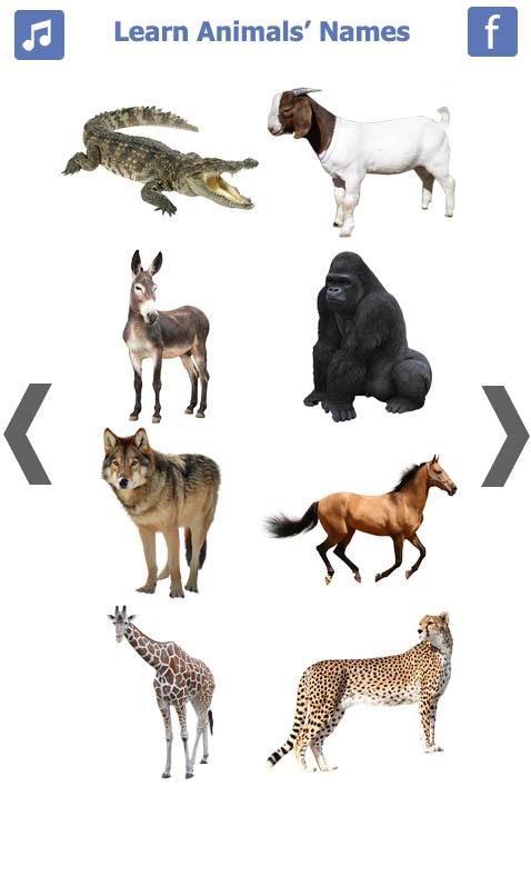 تعليم-أسماء-الحيويانات-باللغة-الانجليزية-3