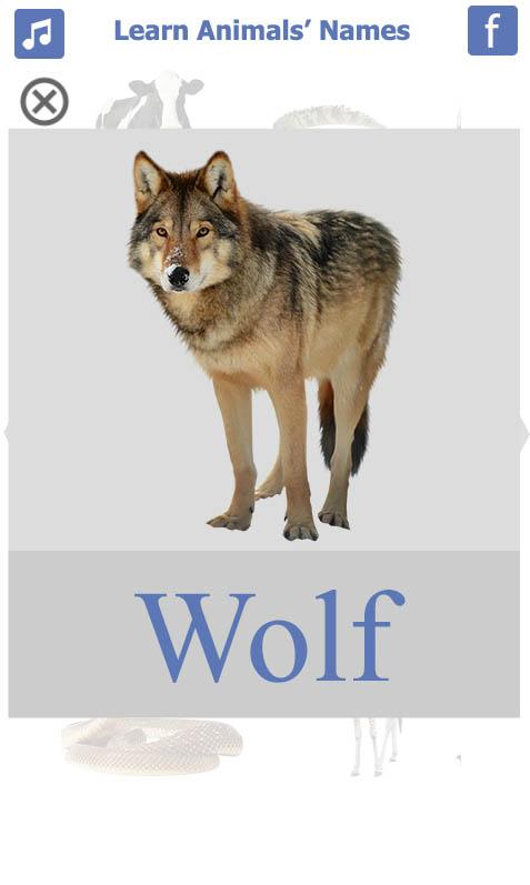 تعليم-أسماء-الحيويانات-باللغة-الانجليزية-wolf