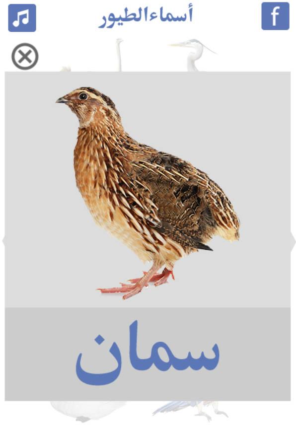 تعليم-أسماء-الطيور-سمان