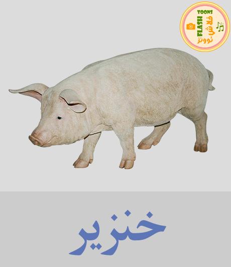 خنزير