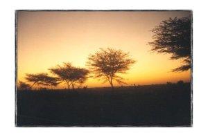 Sunrise by Susmita Bhattacharya
