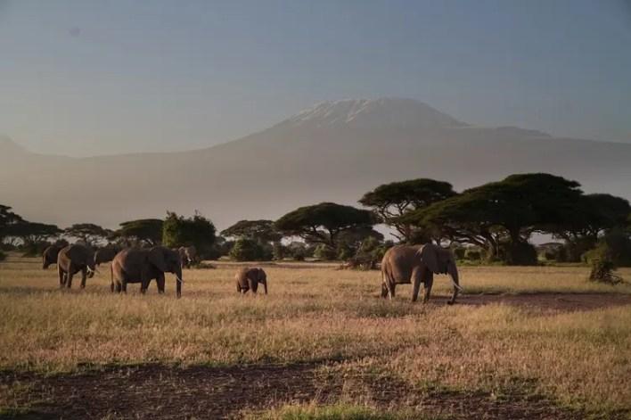 The beautiful Amboseli Park with elephants and backdrop of Mount Kilimanjaro, making it one of the Top Kenya Wildlife Parks.