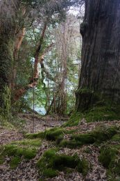 Alerce National Park