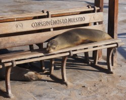Homeless Sea Lion