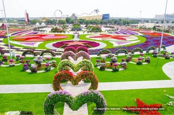 Miracle Garden Dubai 04