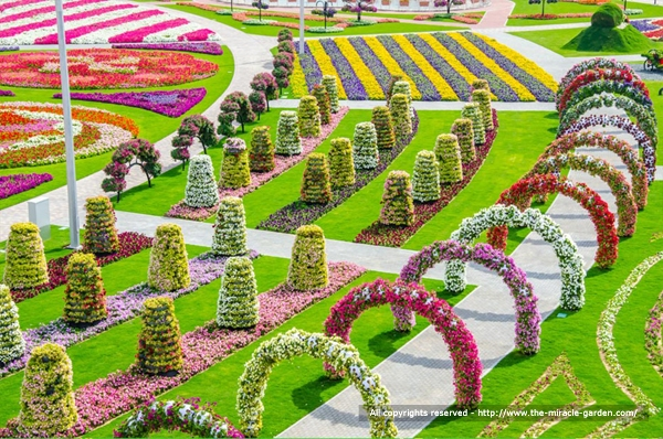 Dubai Miracle Garden 25
