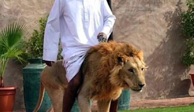 People Riding Pets in Dubai