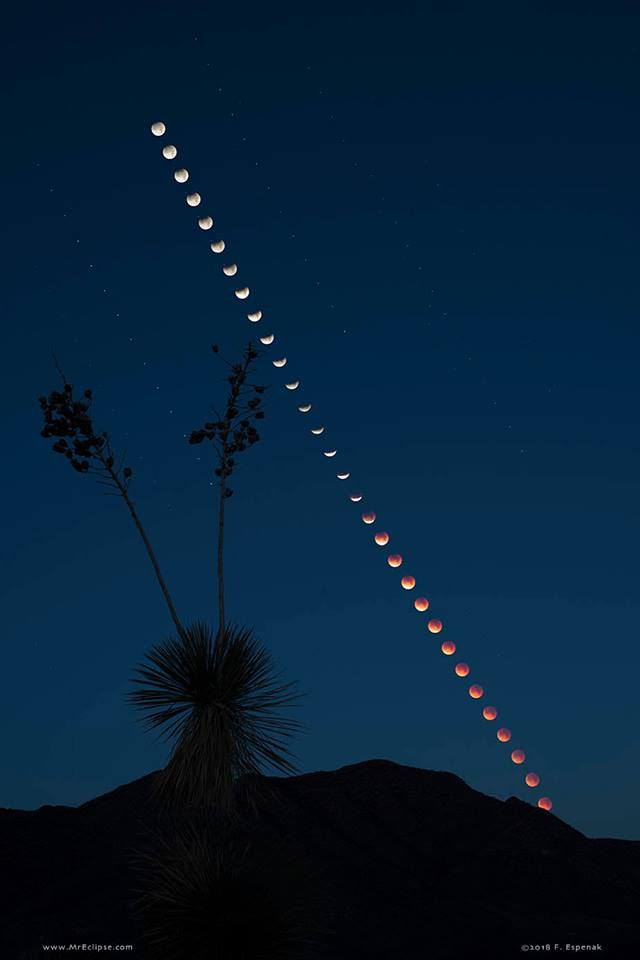Here's an image of a Total Lunar Eclipse at Moonset Image Credit & Copyright: Fred Espenak (MrEclipse.com)