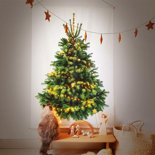 Tiny Trees - duurzame kerstbomen
