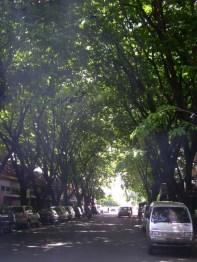Surabaya Tree Lined Street