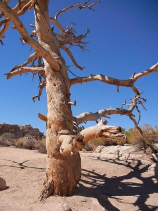 Gnarled Living Tree