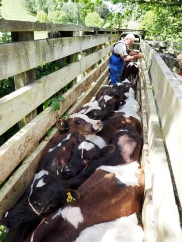 NZ Farming