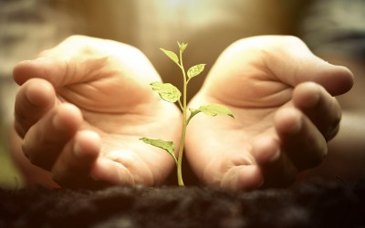 Nurturing Resilience After A Significant Loss