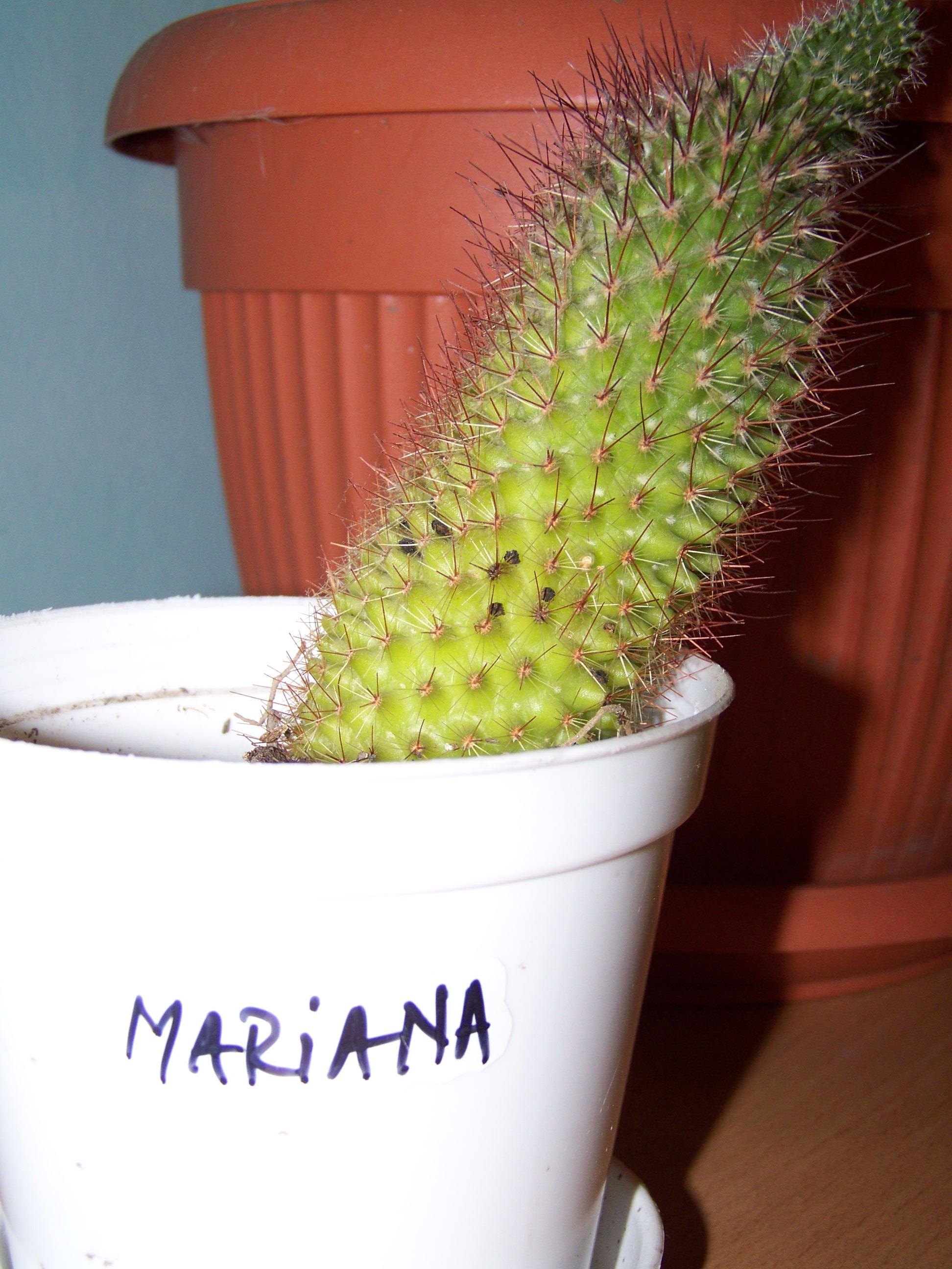Mmm...Mariana
