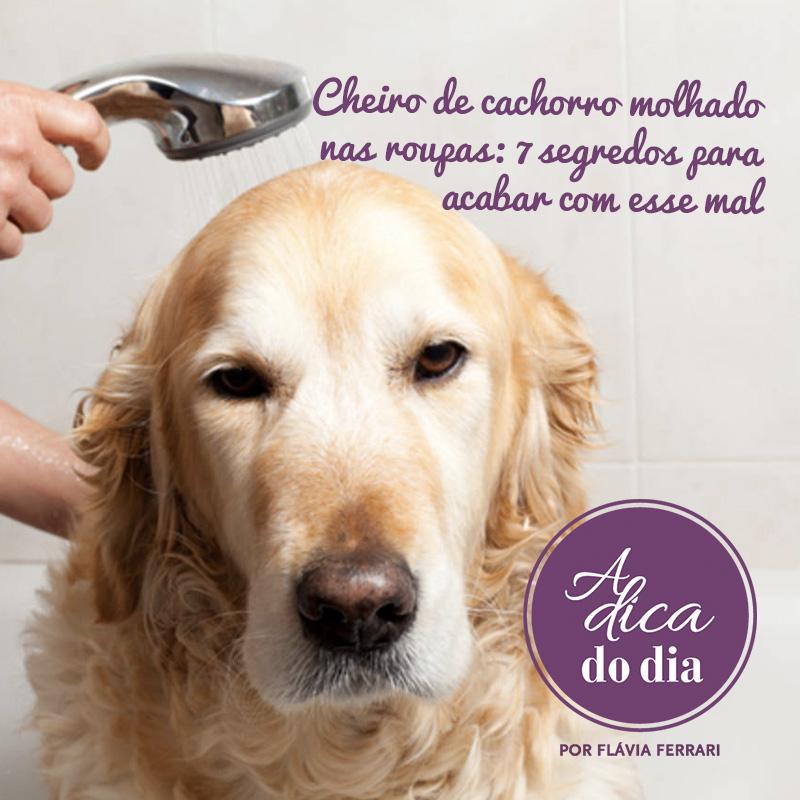 como tirar o cheiro de cachorro molhado das roupas que não secaram direito no varal