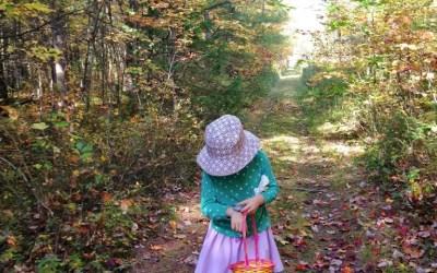 L'automne II – Cueillir des champignons