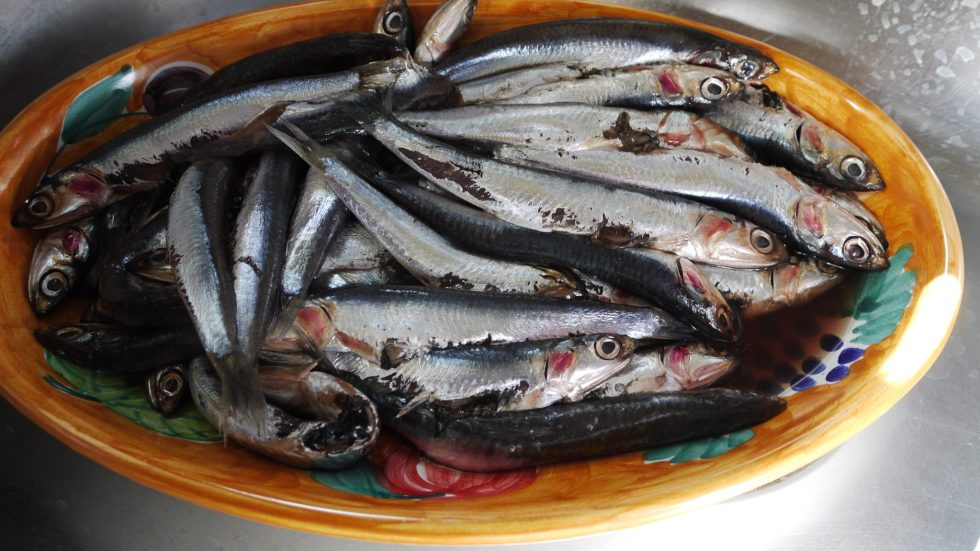 Fresh anchovies for frying, marinating, sauces or stuffing