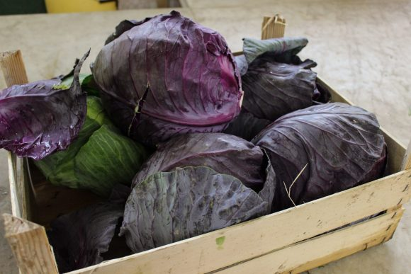 purple cabbage for Sautéed purple cabbage with fresh coriander