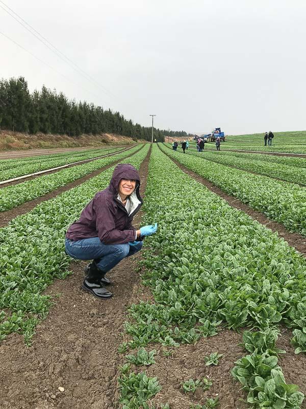 earthbound-farm-organic-spinach-farm