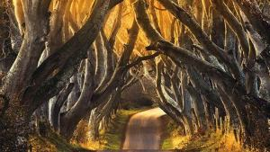 dark-hedges-2