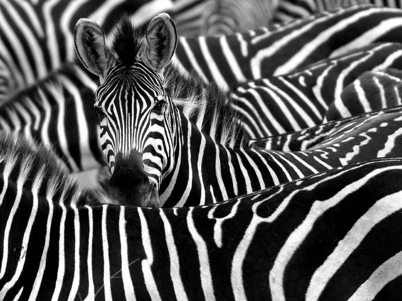 How to wear stripes!