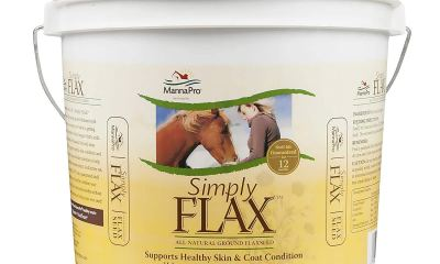 Flaxseed for horses
