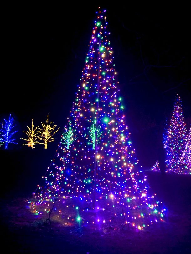 Colorful Longwood Christmas tree with blue lights