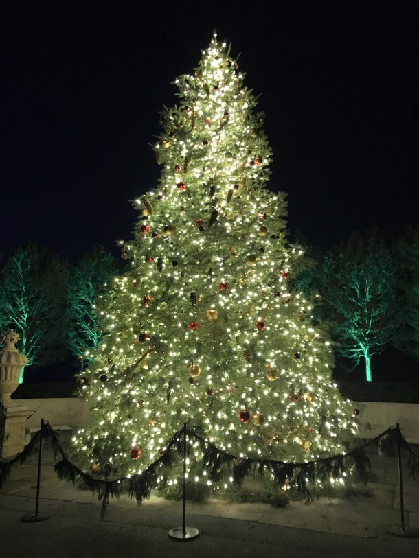 Beautiful and sparkling Longwood Christmas tree