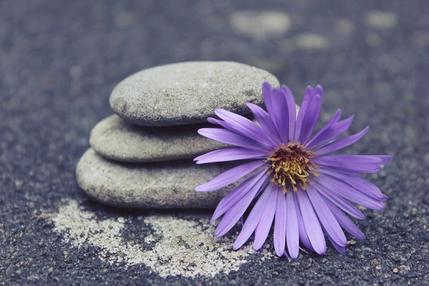 A small piles of rocks with a large purple flower from a meditation garden