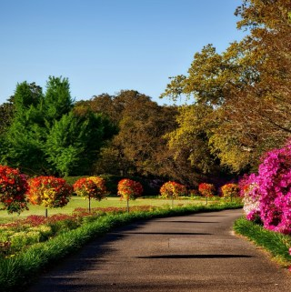 A garden path lined with colorful trees on the left and pink flowers on the right
