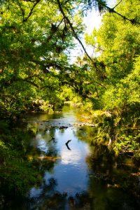 Río fluyendo por un bosque